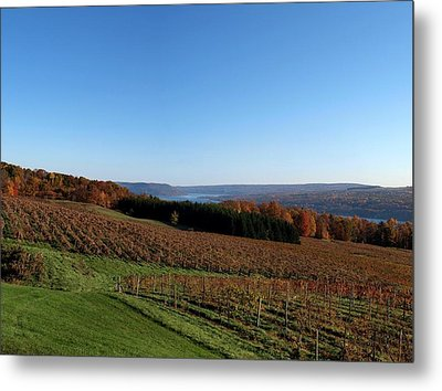 Fall In The Vineyards Metal Print by Joshua House