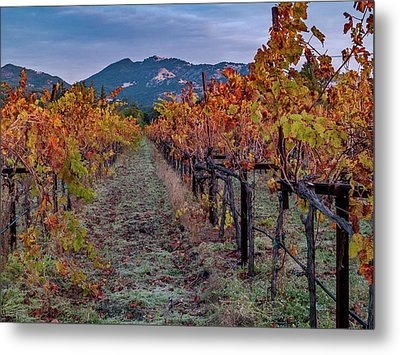 Metal Print featuring the pastel Fall In Wine Country by Bill Gallagher