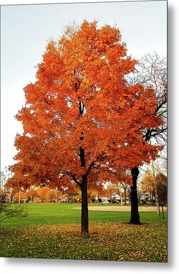 Fall Is Coming Metal Print