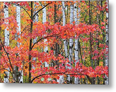 Fall Layers Metal Print