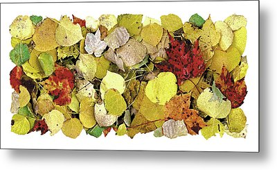 Fall Leaf Vignette Metal Print by JQ Licensing