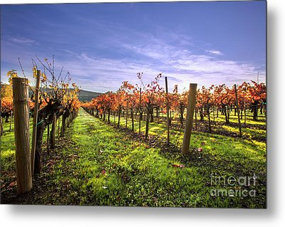Fall Leaves At The Vineyard Metal Print by Jon Neidert