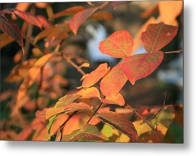 Fall Leaves Metal Print by Linda Ebarb