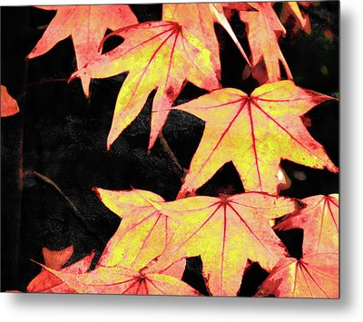 Fall Leaves Metal Print by Robert Ball