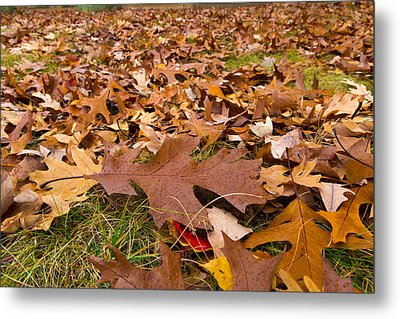 Metal Print featuring the photograph Fall by Lora Lee Chapman