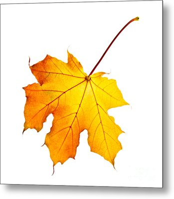 Fall Maple Leaf Metal Print by Elena Elisseeva