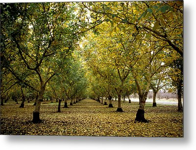Fall Orchard Metal Print by Kathy Yates