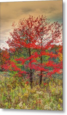 Fall Painting Metal Print by Skip Tribby