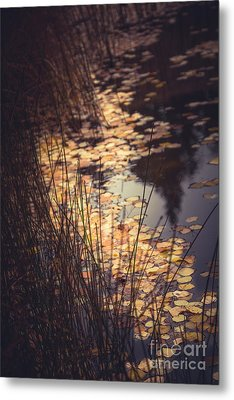 Metal Print featuring the photograph Fall Pond by The Forests Edge Photography - Diane Sandoval