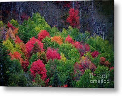 Fall Poppers Metal Print
