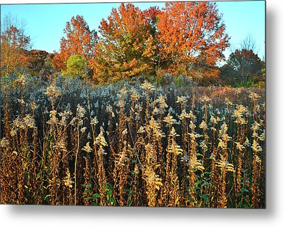 Metal Print featuring the photograph Fall Prairie In Moraine Hills by Ray Mathis