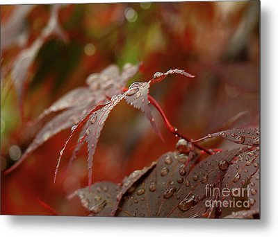 Fall Rain Metal Print