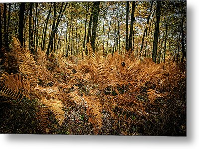 Fall Rust Metal Print