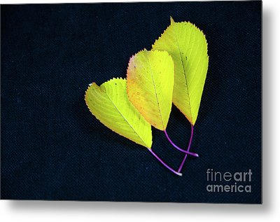 Metal Print featuring the photograph Fall Season Colors by Kennerth and Birgitta Kullman