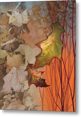 Fall Spectrum Metal Print by Harold Shull