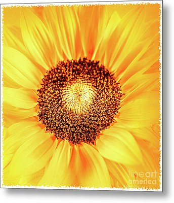 Fall Sunflower Metal Print by Mona Stut