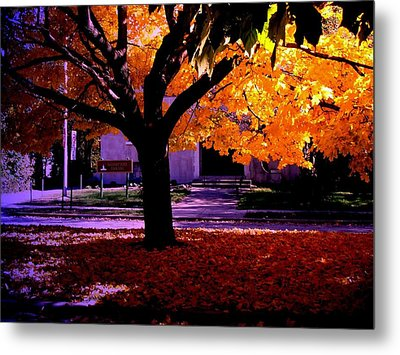 Fall Tree In Woodruff Place Metal Print by Martin Morehead