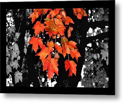 Fall Tree Metal Print by Karen Scovill