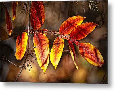 Fall Trees Number One Metal Print by Michael Putnam