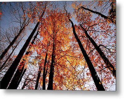 Fall Trees Sky Metal Print by Meta Gatschenberger