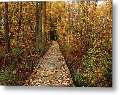Fall Walk Metal Print by Debbie Oppermann