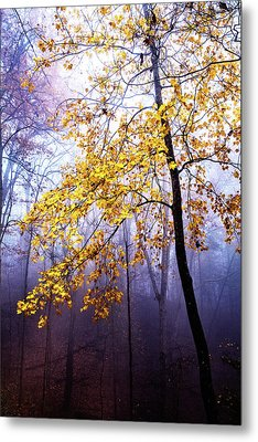 Fall Yellows In The Forest Metal Print by Debra and Dave Vanderlaan