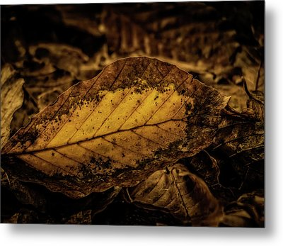 Metal Print featuring the photograph Fallen Color by Odd Jeppesen