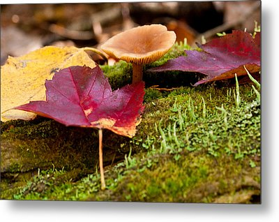 Metal Print featuring the photograph Fallen Leaves And Mushrooms by Brent L Ander