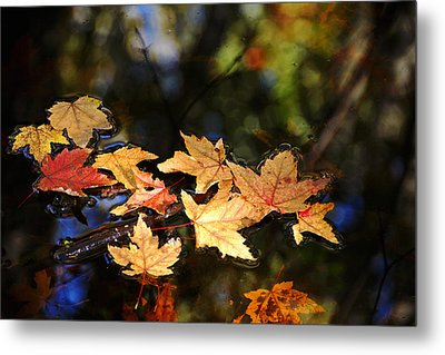 Fallen Leaves On Pond Metal Print by Debbie Oppermann