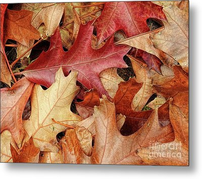 Metal Print featuring the photograph Fallen by Peggy Hughes