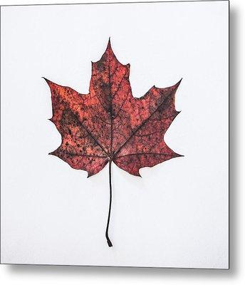 Fallen Red Metal Print