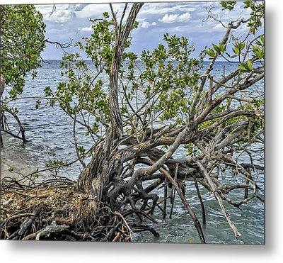 Metal Print featuring the photograph Fallen Tree by Linda Constant