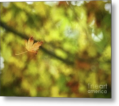 Metal Print featuring the photograph Falling by Peggy Hughes
