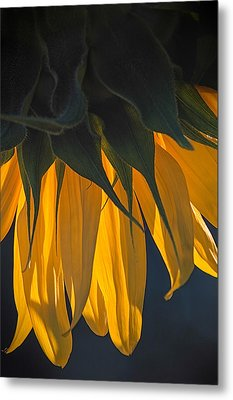 Falling Yellow  Metal Print
