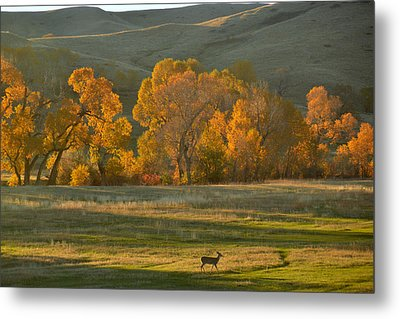 Metal Print featuring the photograph Falls Reward.. by Al Swasey