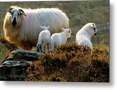 Family Metal Print by Barbara Walsh