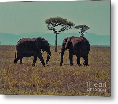 Metal Print featuring the photograph Family by Karen Lewis