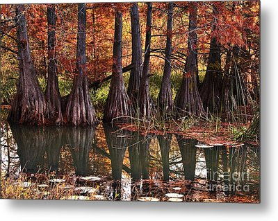 Metal Print featuring the photograph Family Of Cypress At Lake Murray by Tamyra Ayles