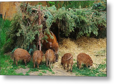 Metal Print featuring the photograph Family by Sergey  Nassyrov