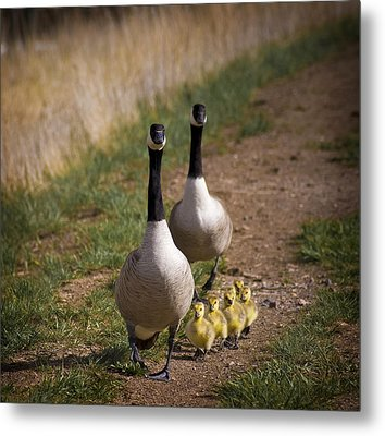 Family Time 2 Metal Print by Marilyn Hunt