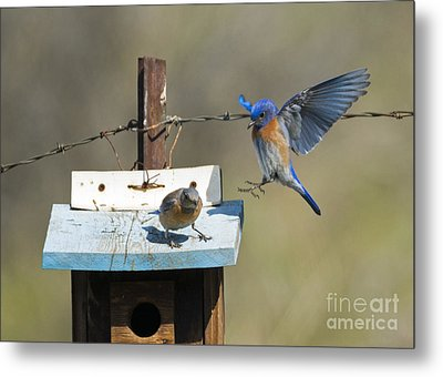 Family Time Metal Print by Mike Dawson