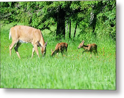 Family Time Metal Print by Sandra Updyke
