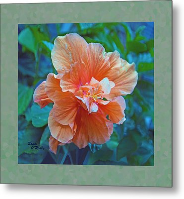 Fancy Peach Hibiscus Metal Print