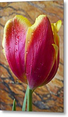 Fancy Tulip Metal Print by Garry Gay