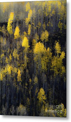 Metal Print featuring the photograph Far And Away by The Forests Edge Photography - Diane Sandoval