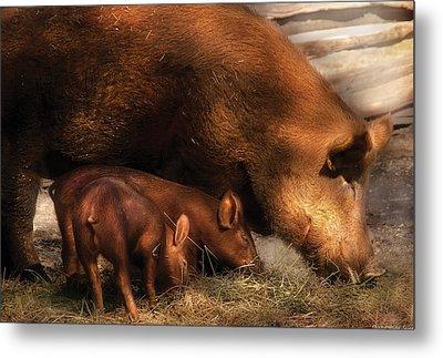 Farm - Pig - Family Bonds Metal Print by Mike Savad