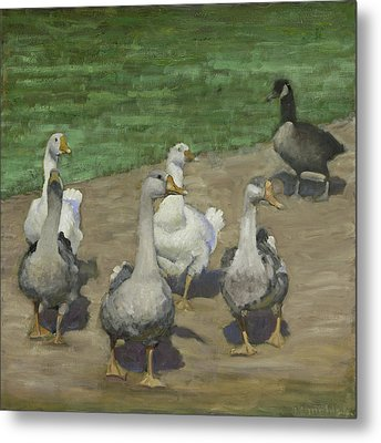 Farm Geese Metal Print by John Reynolds
