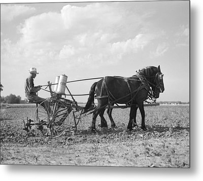 Farmer Fertilizing Corn Metal Print by Arthur Rothstein