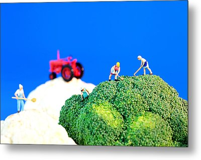 Farming On Broccoli And Cauliflower II Metal Print by Paul Ge
