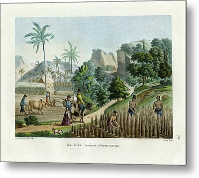 Metal Print featuring the drawing Farming On Guam Island by d apres Pellion